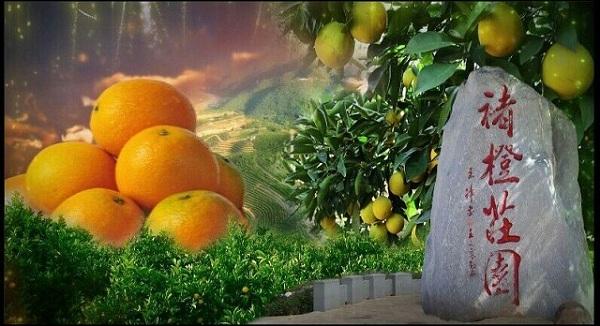 参观考察褚橙庄园-学习褚时健经营才干与管理智慧