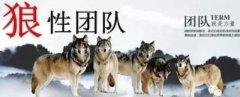【标杆资讯】华尔街日报揭秘:任正非如何把华为员工培养成饥饿群狼